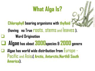 What Alga Is?