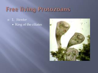 Free living  Protozoans