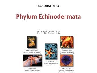 LABORATORIO Phylum Echinodermata