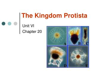 The Kingdom Protista