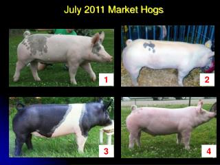 July 2011 Market Hogs