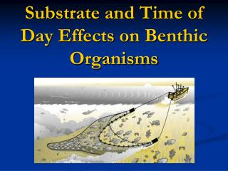 Substrate and Time of Day Effects on Benthic Organisms
