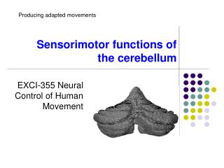 Sensorimotor functions of the cerebellum