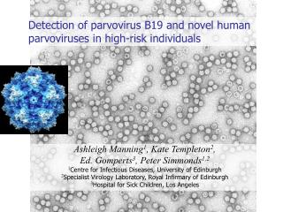 Detection of parvovirus B19 and novel human parvoviruses in high-risk individuals