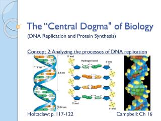 The �Central Dogma