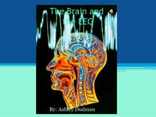 The Brain and  the EEG