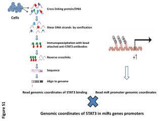 Read genomic coordinates of STAT3 binding