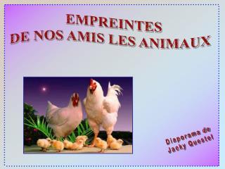 EMPREINTES DE NOS AMIS LES ANIMAUX
