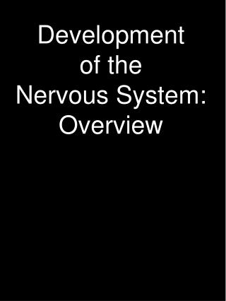Development of the Nervous System: Overview
