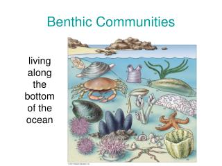 Benthic Communities