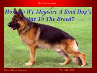 How Do We Measure A Stud Dog's Value To The Breed?