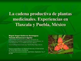 La cadena productiva de plantas medicinales. Experiencias en Tlaxcala y Puebla, México