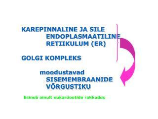 KAREPINNALINE JA SILE ENDOPLASMAATILINE RETIIKULUM (ER) GOLGI KOMPLEKS