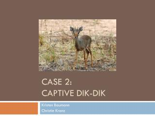 Case 2:  Captive  dik-dik