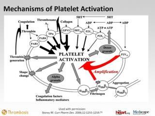 UA/NSTEMI Guidelines: P2Y 12  Inhibitors