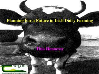 Planning For a Future in Irish Dairy Farming      Thia Hennessy
