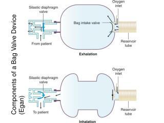 Components of a Bag Valve Device (Egan)