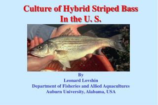 Culture of Hybrid Striped Bass In the U. S.