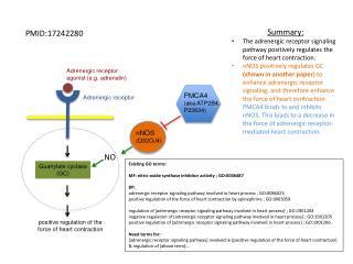Adrenergic receptor