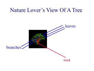 Nature Lover's View Of A Tree