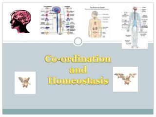 Co- ordination and Homeostasis