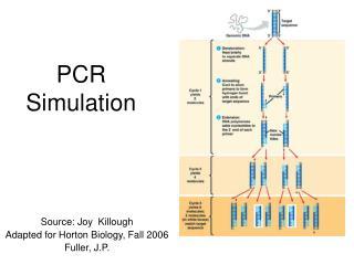 PCR Simulation