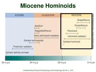 Miocene Hominoids