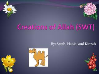 Creations of Allah (SWT)