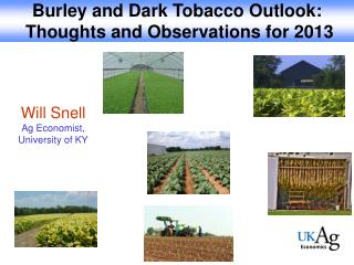 Burley and Dark Tobacco Outlook:  Thoughts and Observations for 2013
