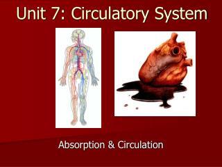 Unit 7: Circulatory System