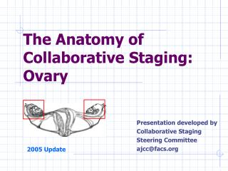 The Anatomy of Collaborative Staging:  Ovary