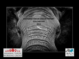 ELEPHANT FOCUS GROUP REPORT COLCHESTER 2013