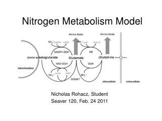 Nitrogen Metabolism Model