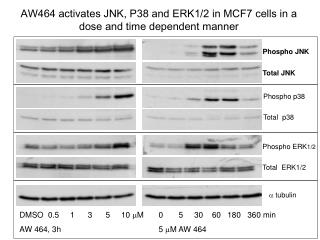 AW464 activates JNK, P38 and ERK1/2 in MCF7 cells in a dose and time dependent manner