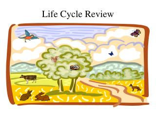 Life Cycle Review