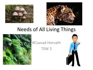 Needs of All Living Things