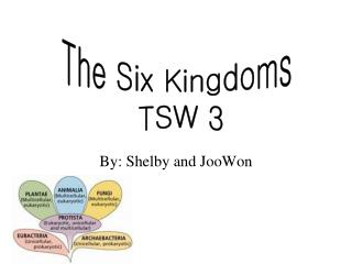 By: Shelby and JooWon