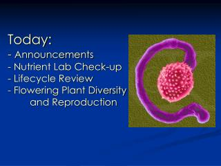 Today: - Announcements - Nutrient Lab Check-up - Lifecycle Review - Flowering Plant Diversity  and Reproduction