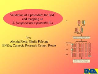 Validation of a procedure for BAC   end mapping on  S. lycopersicum x pennellii  ILs