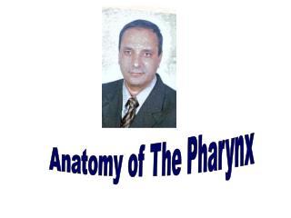 Anatomy of The Pharynx