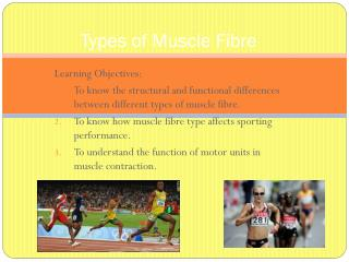 Types of Muscle Fibre