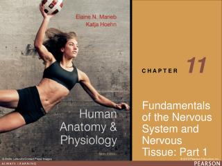 Fundamentals of the Nervous System and Nervous Tissue: Part 1