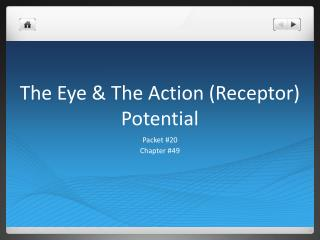 The Eye & The Action (Receptor) Potential