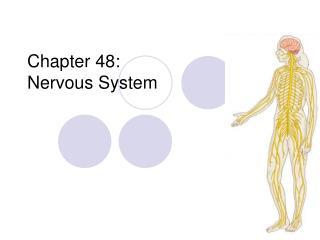 Chapter 48:  Nervous System