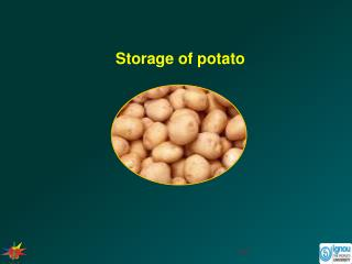 Storage of potato