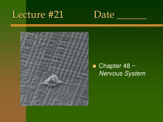 Lecture #21Date ______