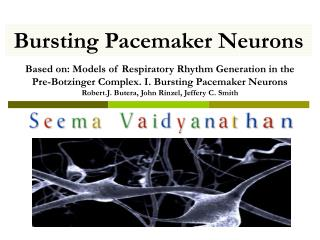 Bursting Pacemaker Neurons
