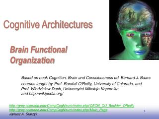 Brain Functional Organization