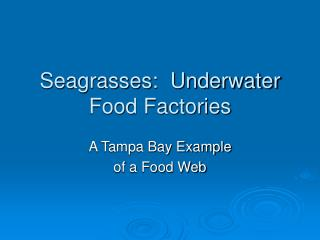 Seagrasses:  Underwater Food Factories