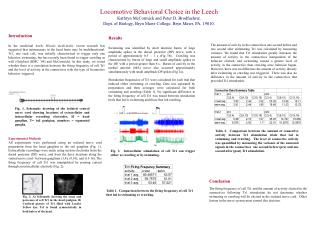 Locomotive Behavioral Choice in the Leech Kathryn McCormick and Peter D. Brodfuehrer.